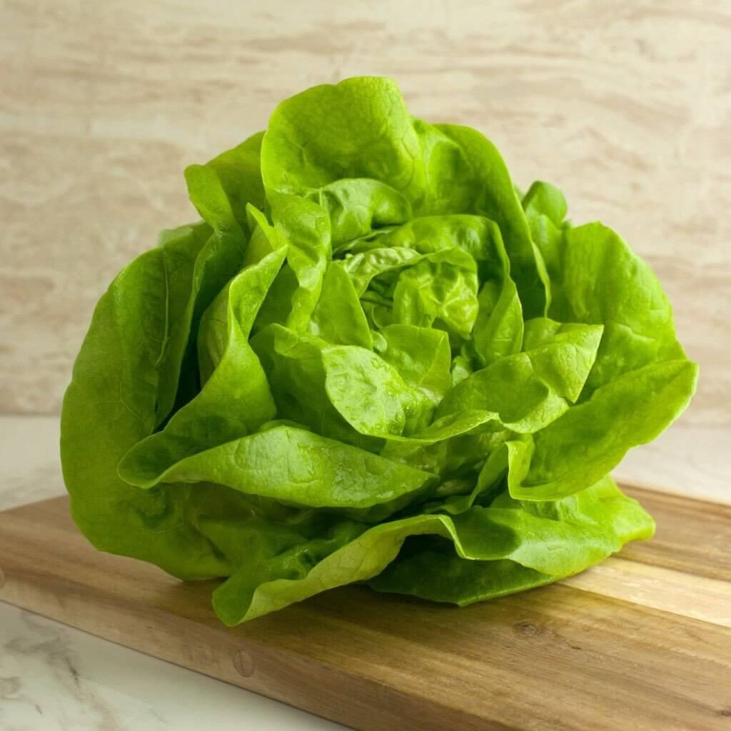 butter lettuce head