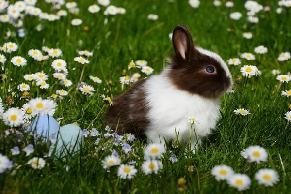 a small bunny