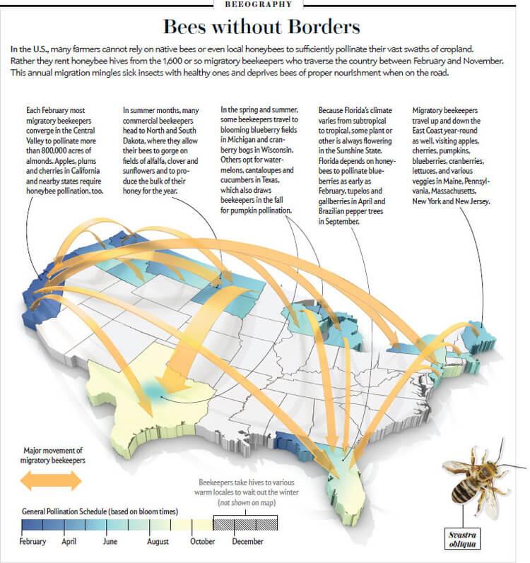 bee pollination migration